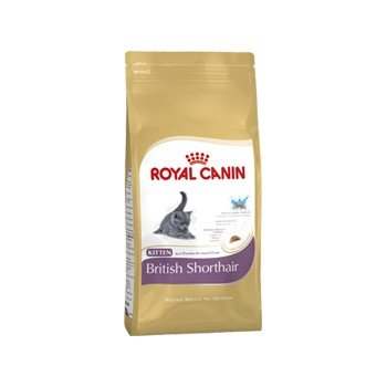 British shorthair корм royal canin food